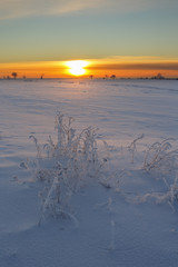 Sunset over snowy fields with frost on the plants