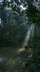 Fototapeta Światło w magicznym miejscu. Wczesny poranek w parku krajobrazowym Segiet (UNESCO). Polska obraz