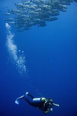 Coral reefs of Red Sea, Sharm el Sheikh, Egypt