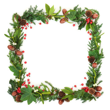 Natural winter and Christmas square wreath border with cedar cypress, fir, holly berries, ivy, mistletoe, pine cones and acorns on white background. Festive card for the holiday season.