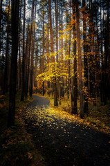 осень в тенистом лесу с дорогой, Россия, Урал