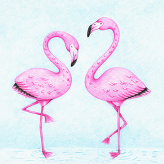 hands drawn picture of two pink flamingos standing in the water by the color pencils. Illustration of bird for kids