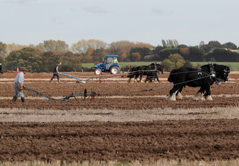 Ploughs are pulled by horses and tractors during the British National Ploughing Championships in Austrey
