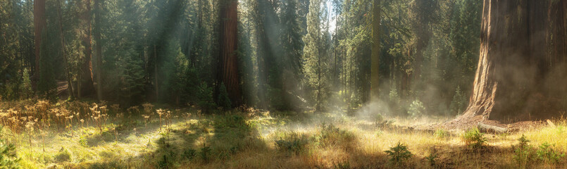 Morning in Sequoia National Park, USA