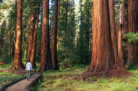 Hiker in Sequoia National Park, California, USA
