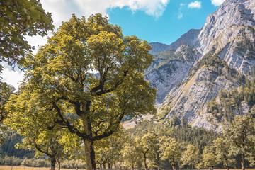 Beautiful alpine view at the Big Maple Ground - Austria