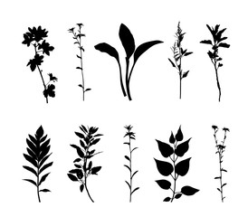 Plants silhouette set isolated on white background vector