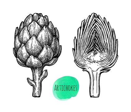 Ink sketch of artichokes.