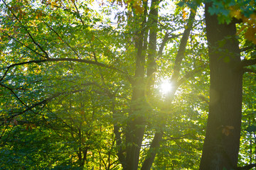 sunlight in the forest in october