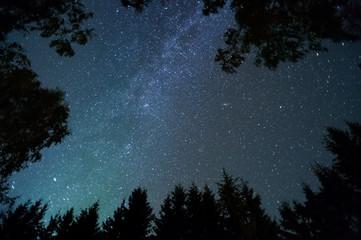 Milky way and stars above treetops.