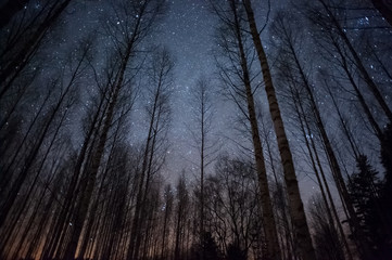 Stars above winter forest.