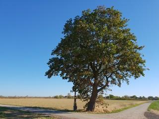 Oak tree at the crossroads with a holy cross, Ramershoven, Rheinbach