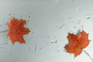 Red maple leaves on water background top view. Mockup for design. Copy space.