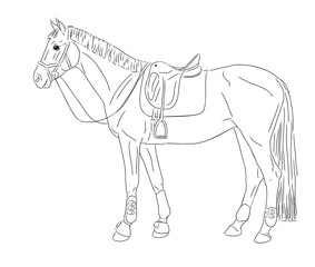 Vector illustration. Horse.