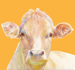 Vector illustration of a watercolor muzzle cow. Cow isolated on orange background. Frontal head of a cow. - 227690554