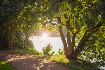 natürlicher Rahmen aus Bäumen mit Blendenfleck. Standort: Deutschland, Nordrhein-Westfalen, Hoxfeld