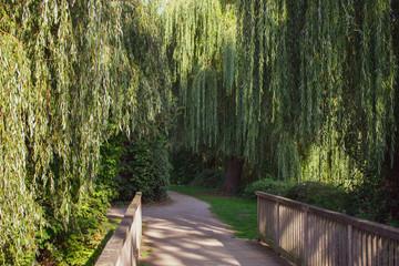 verwunschene Holzbrücke mit Trauerweiden. Standort: Deutschland, Nordrhein-Westfalen, Hoxfeld