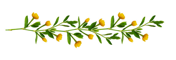 Line arrangement with fresh leaves and yellow flowers