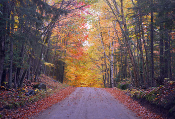 Autumn foliage with red, orange and yellow fall colors in A Northeast forest, USA