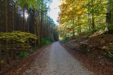 Acrylic Prints Nature Wanderweg am Langbathsee mit vielen Laubbäumen im Herbst