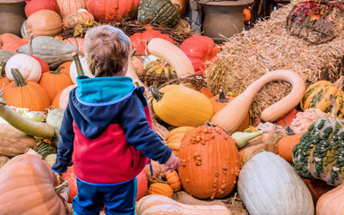 A young boy is playing among a pile of pumpkins