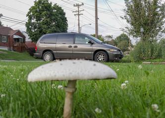 Mushroom and Van