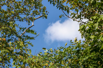 Tree Frame With Clouds