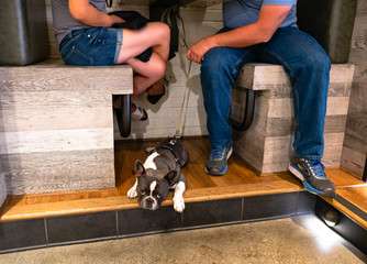 A Couple Has Lunch as Thier French Bulldog Waits Below Under the Table