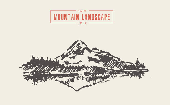 Mountain landscape spruce forest lake vector drawn