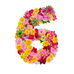 Number 6 made from flower isolated on white background. Whit clipping path