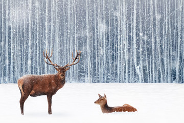 Fototapete - Family of noble deer in a snowy winter forest. Christmas fantasy image in blue and white color. Snowing.