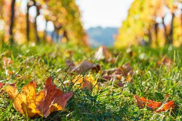 Herbststimmung im Weinberg