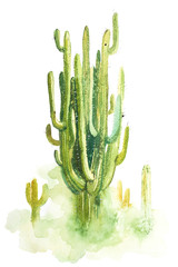 Watercolor hand drawn spiky cactus isolated on white