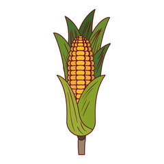 white background with corn cob with leaves with thick contour
