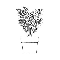 monochrome blurred silhouette of carrot plant in flower pot