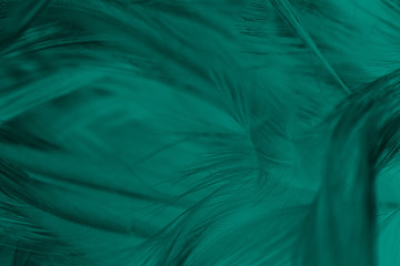 Beautiful dark green turquoise vintage color trends feather texture background