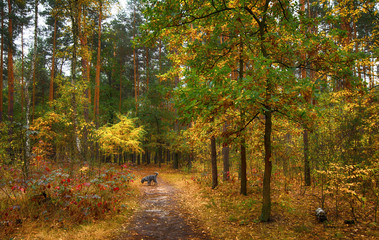 walk in the autumn forest. autumn colors. autumn fogs. colors of autumn. melancholy.