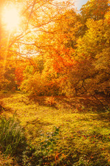 Beautiful Autumn landscape Background. Yellow maple trees, sunbeams and forest path in Autumn Park at sunny day in October..