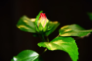 flower on its birth