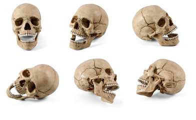 Six plastic human skulls with open jaws at various angles on white background