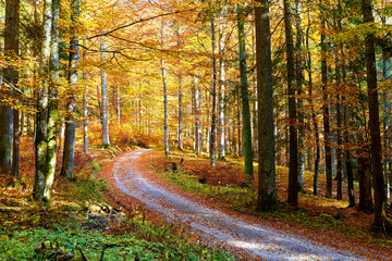 The way through autumn forest