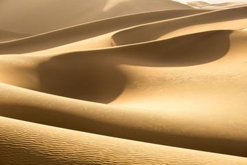 desert closeup