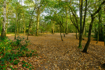 Mousehold Heath 8