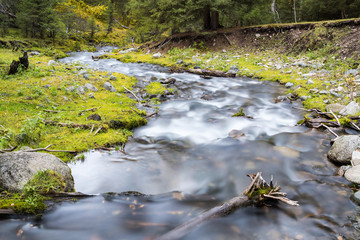 curving stream in forest