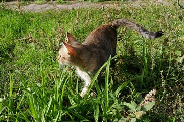 Brown tabby cat in green grass