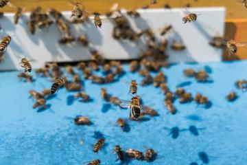 Flying bees at Beehive macro shot
