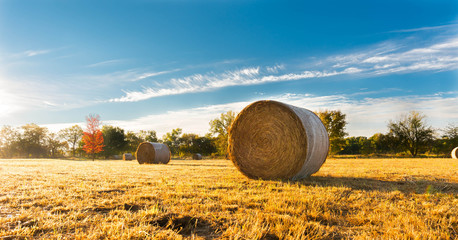 Hay bale in a farm field Wall mural