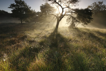 beautiful sunbeams through tree branches in morning