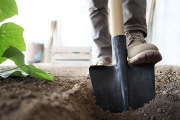 Fototapeta working in vegetable garden, foot spade the soil, close up