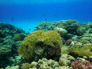 Colorful corals reef with fishes